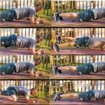 7 Exercícios de Prancha para os Runners Fortalecerem o Core