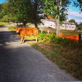 French Cycling Holidays with Corrèze Cycling