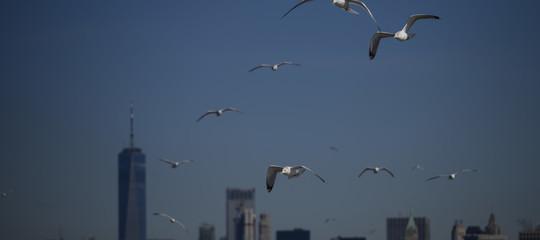 grattacieli uccelli