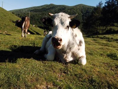 Ricerca: per italiani carne bovina parte della dieta mediterranea