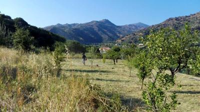 La foresta nasce in banca, 245 alberi entro l'anno