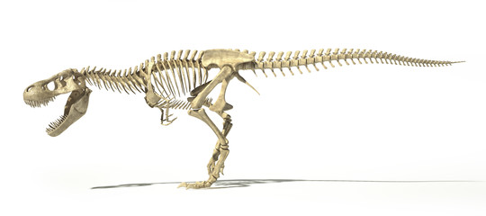 fossile t rex
