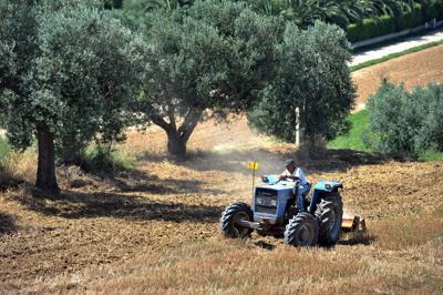 Ismea, al via selezione 150 giovani imprese agricole