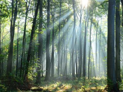 Clima, non bastano gli alberi, servono le foreste naturali