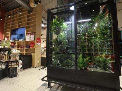 Migliorare la qualità dell'aria con le piante, succede al supermercato