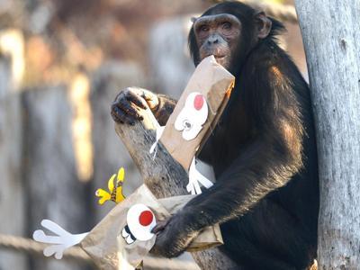 'Scarta la carta', ancora regali per gli animali del Parco Natura Viva