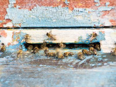 Clima, con moria api a rischio il 70% della produzione agricola mondiale