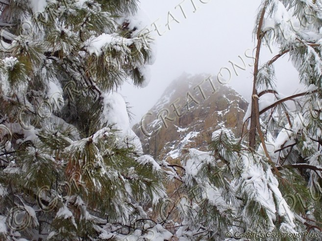 Winter Wonderland; taken in the Catalina Mountains.