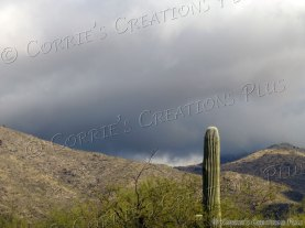 Lone Saguaro; photo taken on Snyder and Houghton roads in Tucson