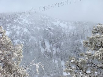 A snowy mist falls over the Catalina Mountains in southeastern Arizona.