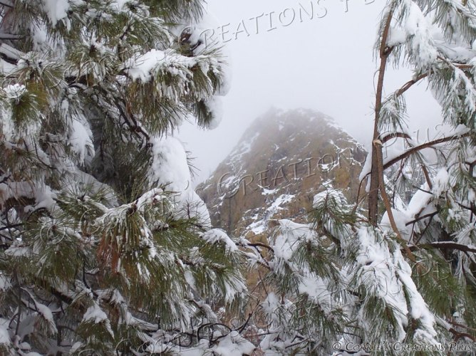 Winter Wonderland! Snow graces the Catalina Mountains in southeastern Arizona.