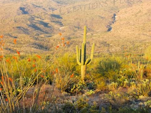 Saguaro National Monument, Tucson, Arizona