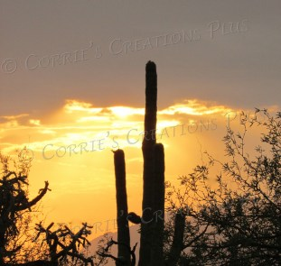 """A """"golden hour"""" sunset at Agua Caliente Park in Tucson"""