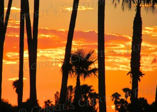 Silhouetted palm trees stand in contrast to a brilliant golden sunset in Tucson.