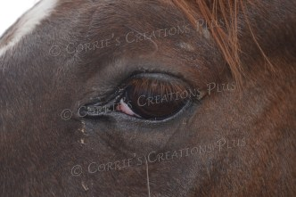 Upclose photo of a horse