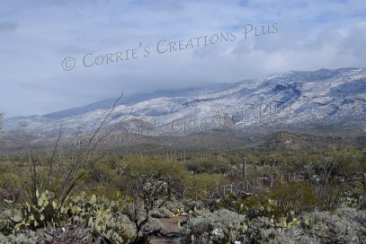 Southeastern Arizona in winter
