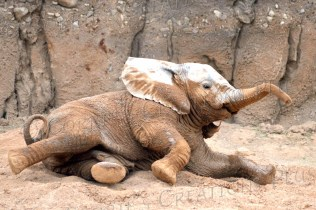 Nandi playing in dirt and mud.
