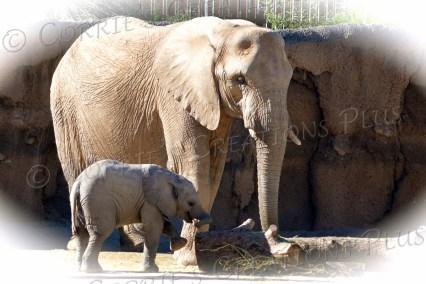 Nandi and her Mom, Semba