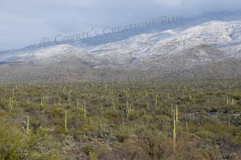 Saguaro National Park located in southeastern Arizona