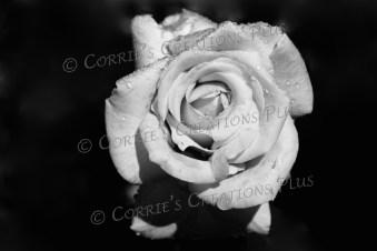 Raindrops 'n rose
