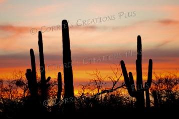 A sunset in Sabino Canyon in southeastern Arizona