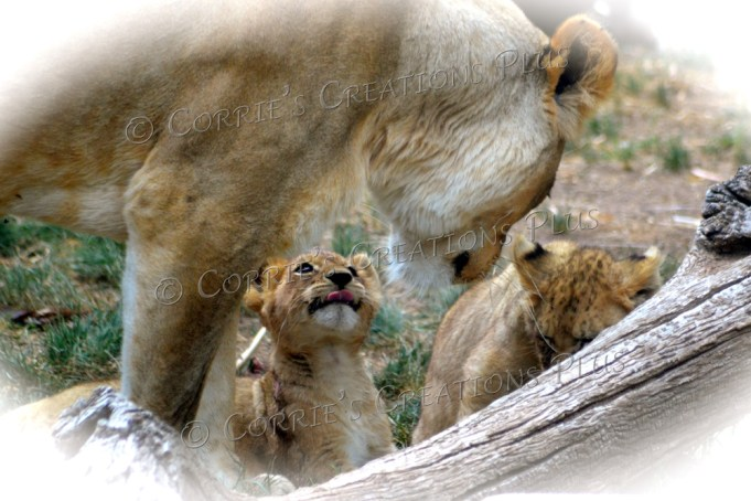 Mother lion and her cubs