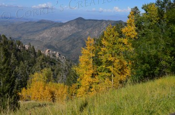 Fall colors are stunningly beautiful in the Catalina Mountains in southeastern Arizona.