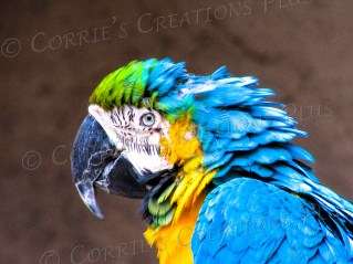 Macaw: a bird of beautiful colors