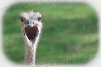 This ostrich photo is begging for a caption!