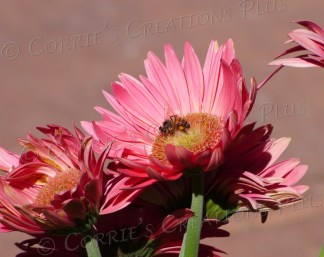 Spring pollination in Tucson