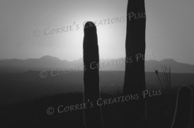 A sunset taken from the foothills of the Catalina Mountains in southeastern Arizona