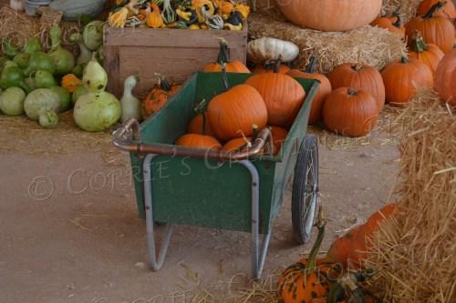 Cart-load of pumpkins