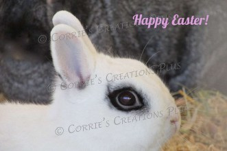 Happy Easter from the Easter Bunny!