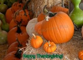 Happy Thanksgiving from Tucson, Arizona