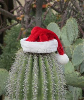 Santa hat on a Saguaro cactus in Tucson