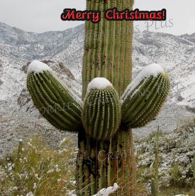 The snow-capped Rincon Mountains grace this giant Saguaro cactus.