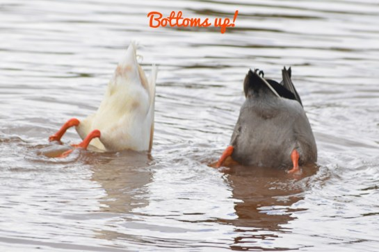 Synchronized swimming, anyone?