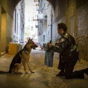 Bailey as a police dog