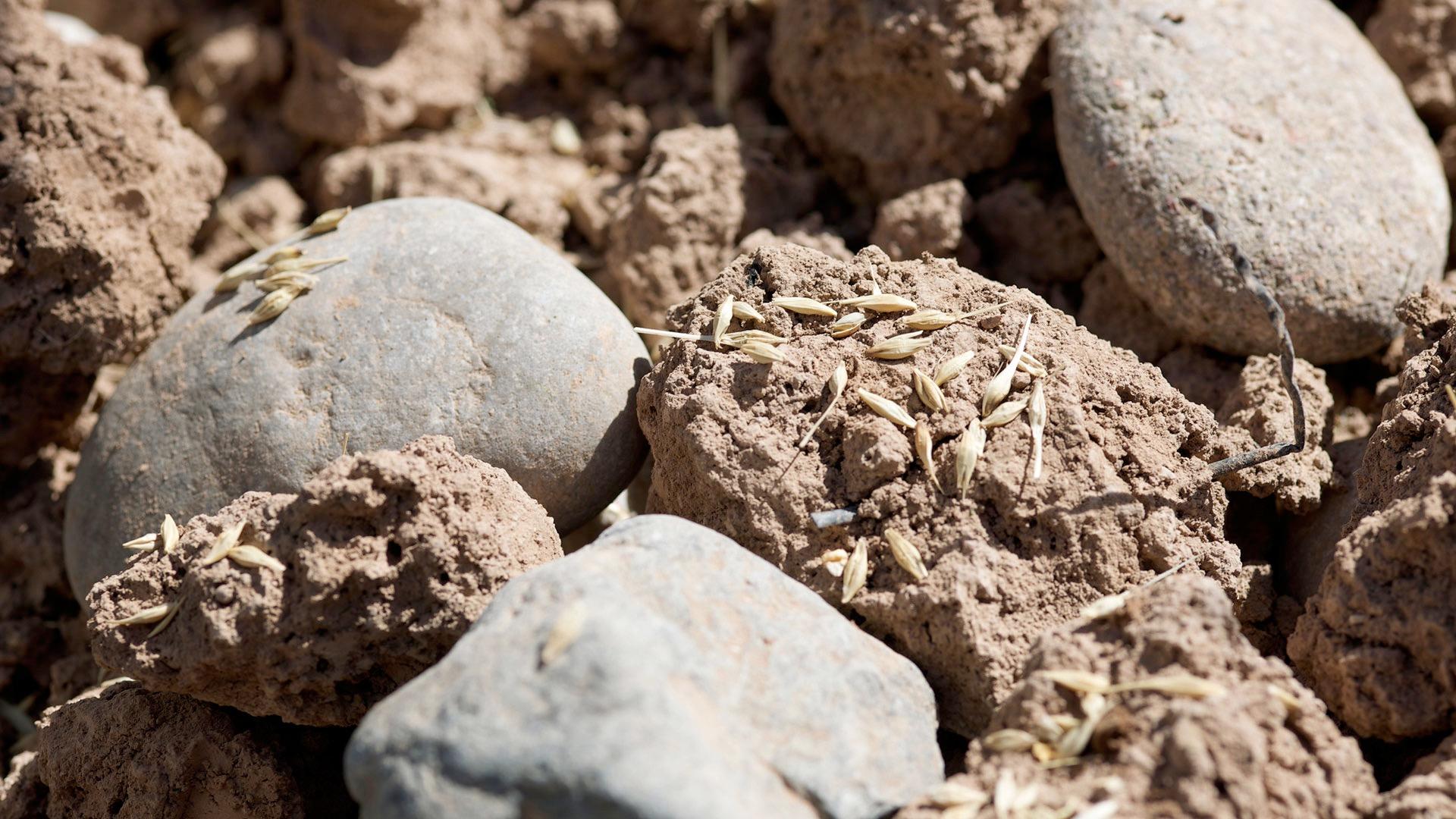 Grain cast onto a variety of soils