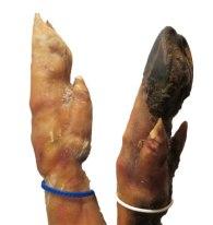 falsos mitos sobre el jamón