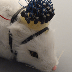 EEG Mini-Cap