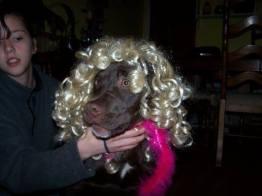 Calvin the Blonde Bombshell (Stacy Burns)