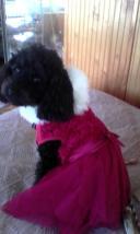 Cosette the Princess (Lindy Vangeli)