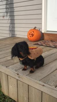 Hopper the Hot Dog (Gina Marie)