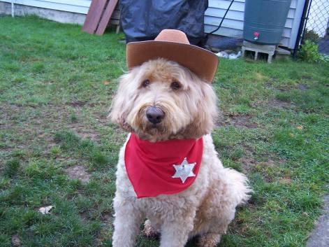 Sheriff Ryley (Karen Spafford)