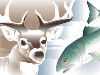Hunting and fishing illustration