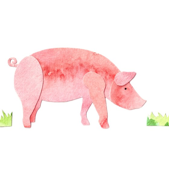 Pig Assembled Watercolor Print by Cortney North