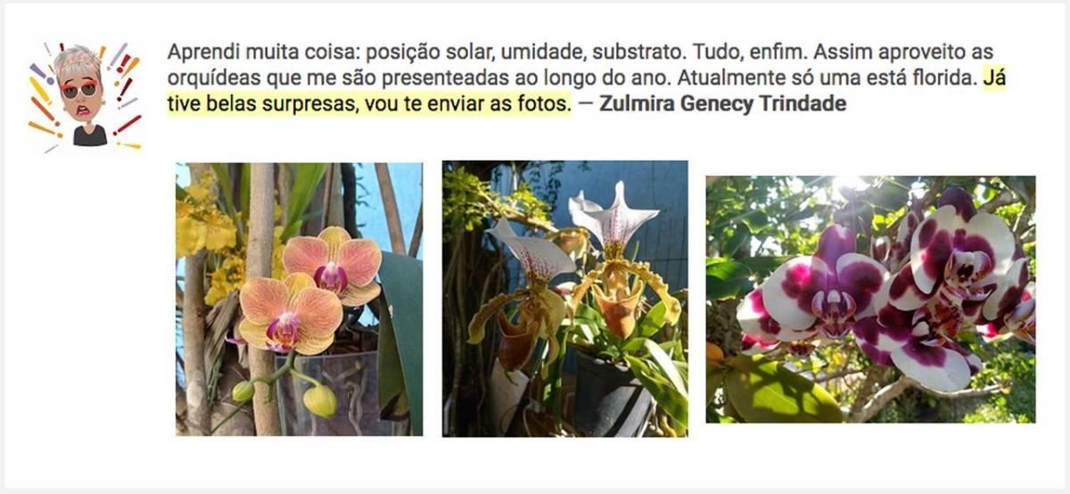 Orquideas sem Segredos