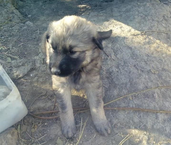Sungurlu'da yavru köpekler bakıma alındı