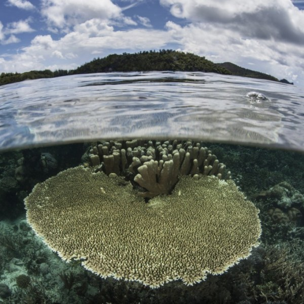 climate change ocean